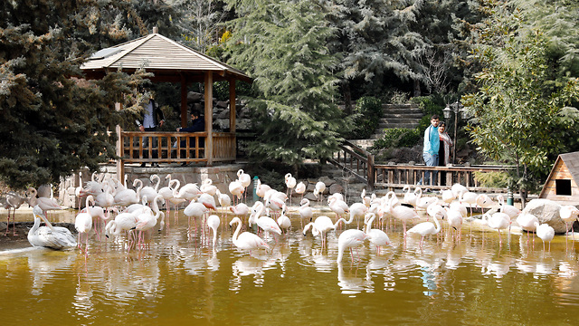 Flamingos at the Tehran Bird Garden in Iran (Photo: EPA)
