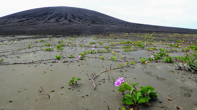 אי הונגה טונגה הונגה האפאי (מתוך אתר נאס