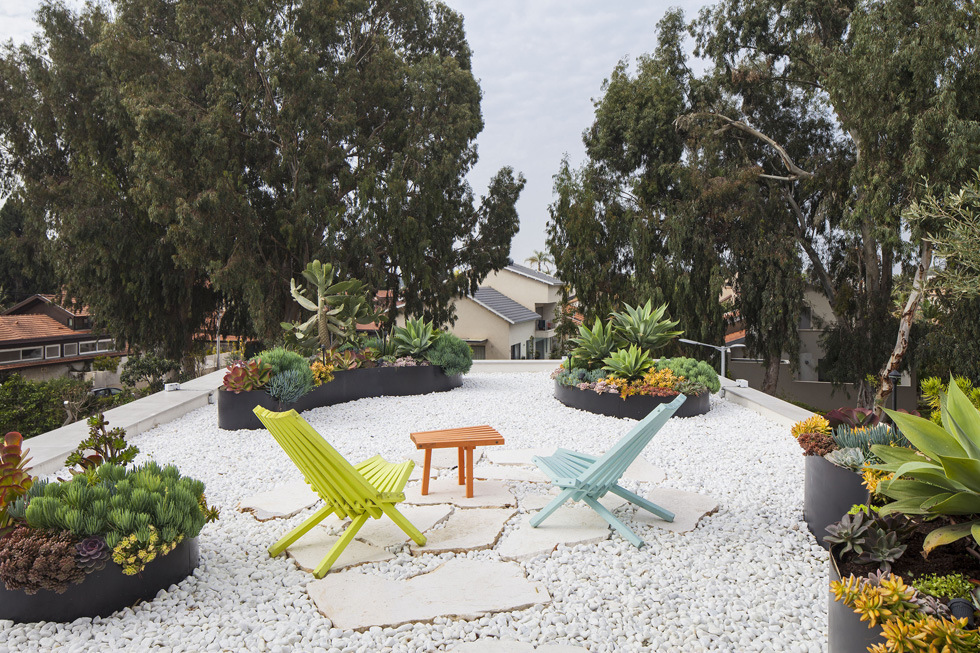 גינת הסוקולנטים על הגג. כאילו קליפורניה הגיעה לישראל (צילום: עמית גרון)