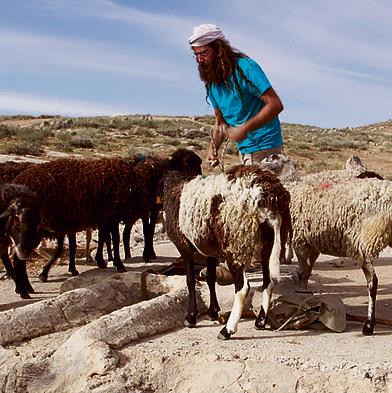 """עם עדר הכבשים, מתוך הסרט """"חלומו של אבידן"""" המוצג בסינמטקים"""