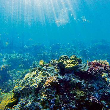 משנרקלים בשוניות האלמוגים