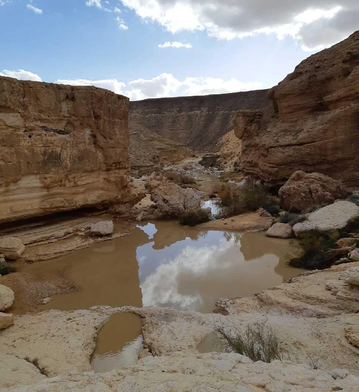 А так выглядит сейчас природа на юге Израиля. Фото: Рути Нашиц, Управление парков и заповедников