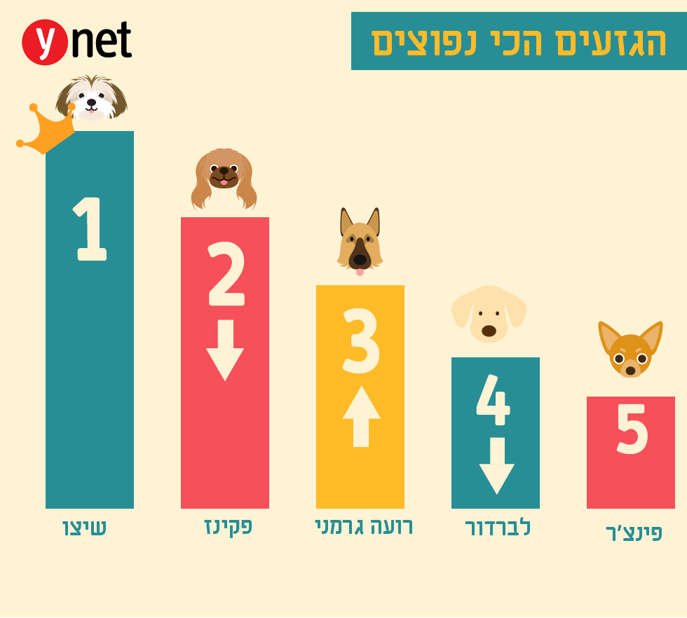 הגזעים הכי נפוצים בישראל (איור: shutterstock)