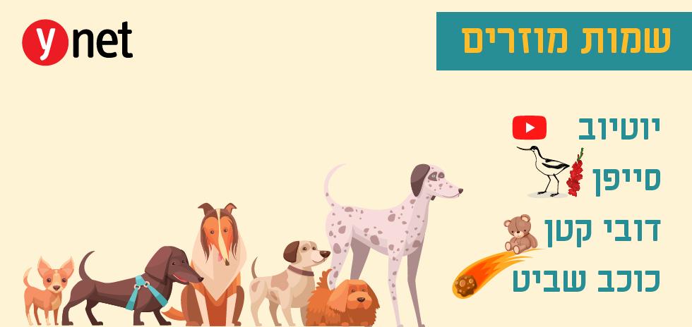 שמות מוזרים לכלבים (איור: shutterstock)