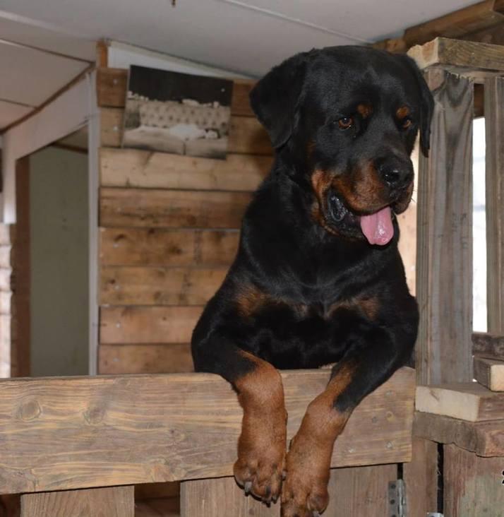 The farm's tenants (Photo: Yuval Mendelovitz Dog Rescue Farm)