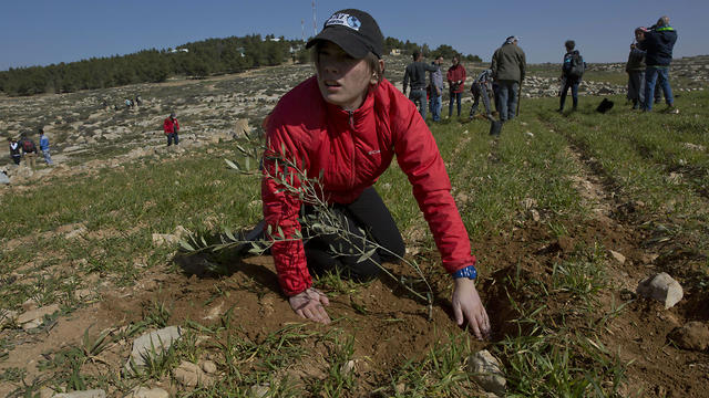 American rabbinical students plant olive trees, on the land near the West Bank village of Attuwani, south of Hebron