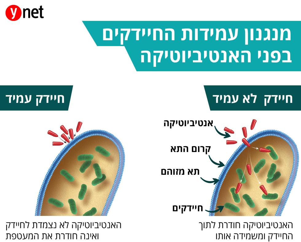אינפו חיידקים עמידים ()