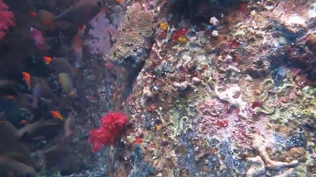 האלמוגים שנפגעו באילת (צילום: ד