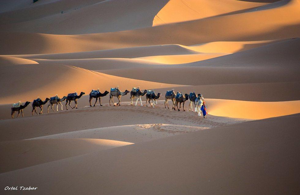 טיול במרוקו (צילום: אורטל צבר)