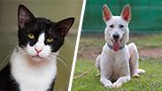 צילום: כלבים של החיים | צער בעלי חיים רמת גן