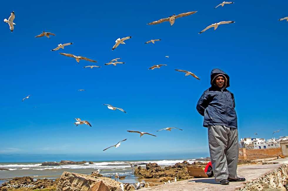 אסואירה מרוקו (צילום: אורטל צבר)