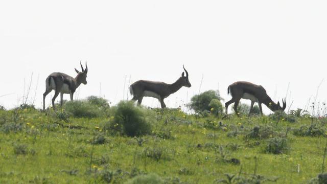 Wildlife on the Golan Heights