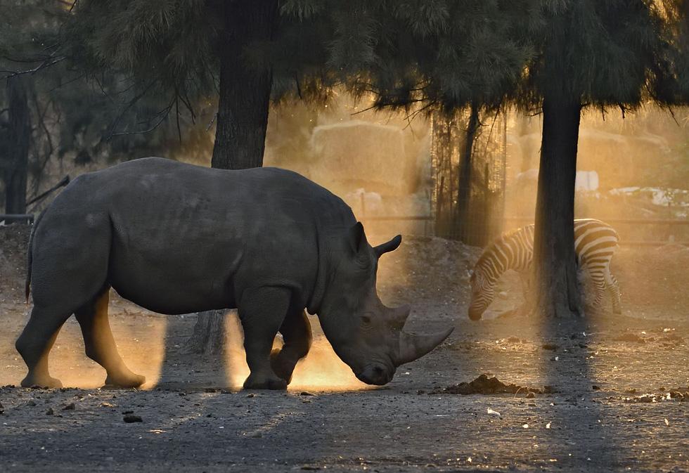 """""""נפתח שיח על החיות המזדקנות שהשיק ליחס שלנו לבני אדם שמזדקנים ומתבגרים וזה מאוד ריגש אותי"""" (צילום: טיבור יגר)"""