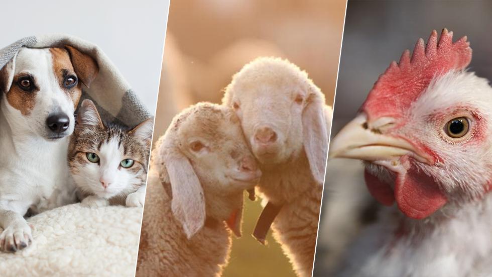 זכויות בעלי חיים (צילום: shutterstock)