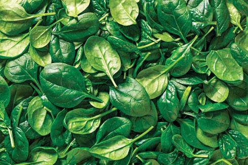 החומצה הפולית יכולה לעזור לטיפול במחלות חניכיים (צילום: Shutterstock)