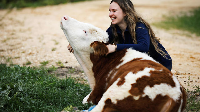 A volunteer hugs Nir the cow fitted with prosthetic leg at the Freedom Farm  (Photo: Reuters)