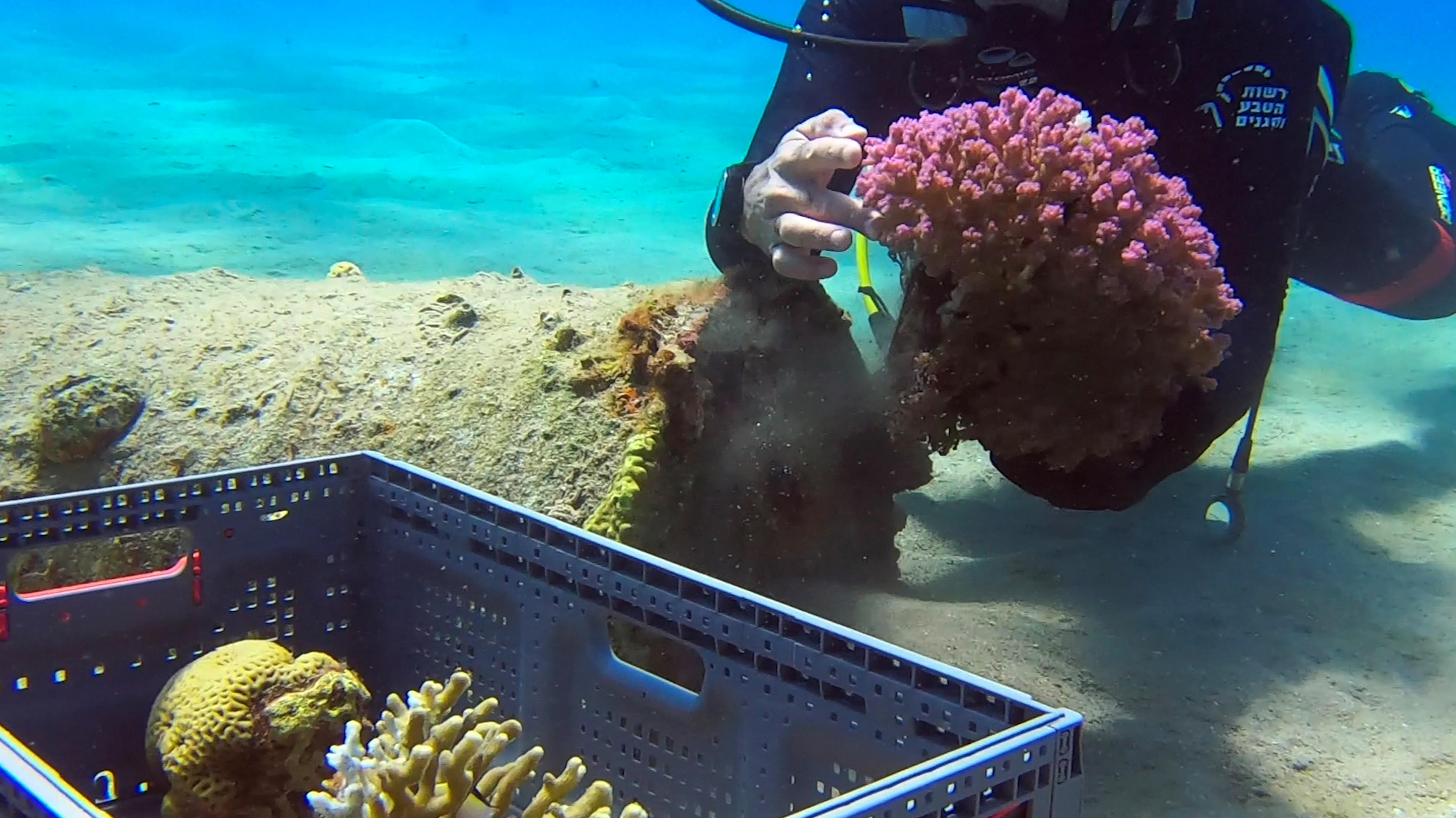 Removing the coral reef is a slow and careful process