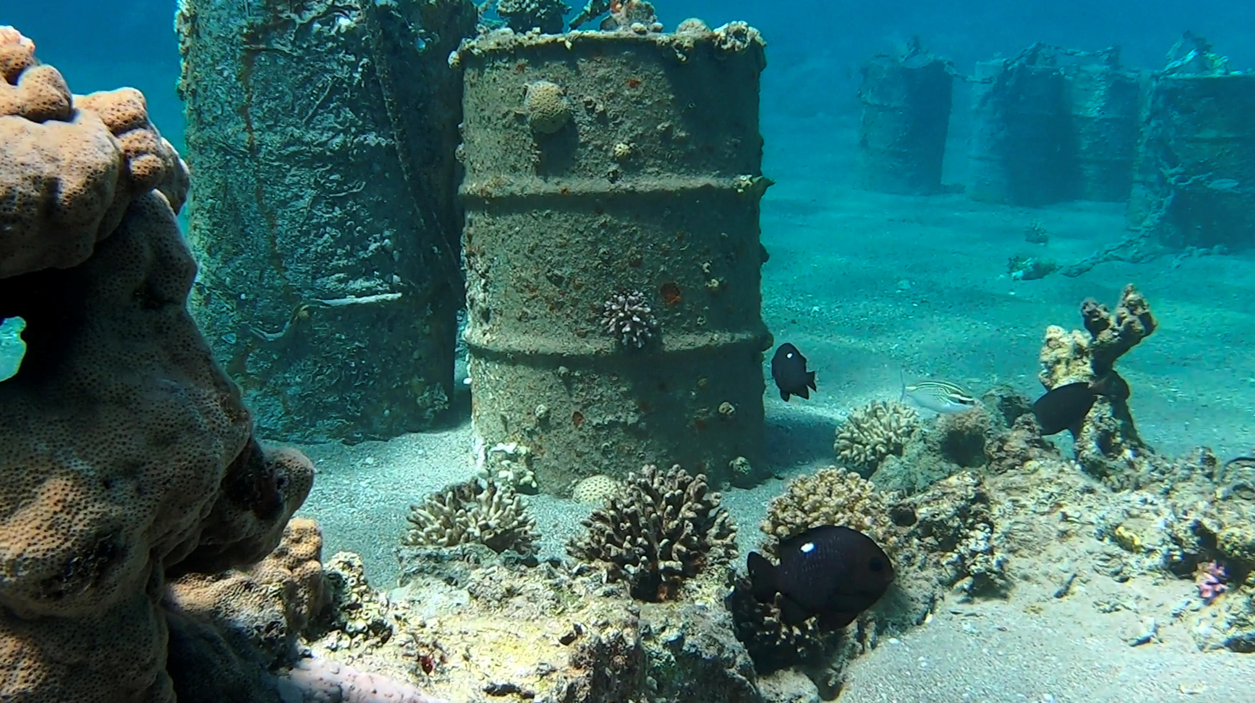 The coral reef thrived among oil company debris