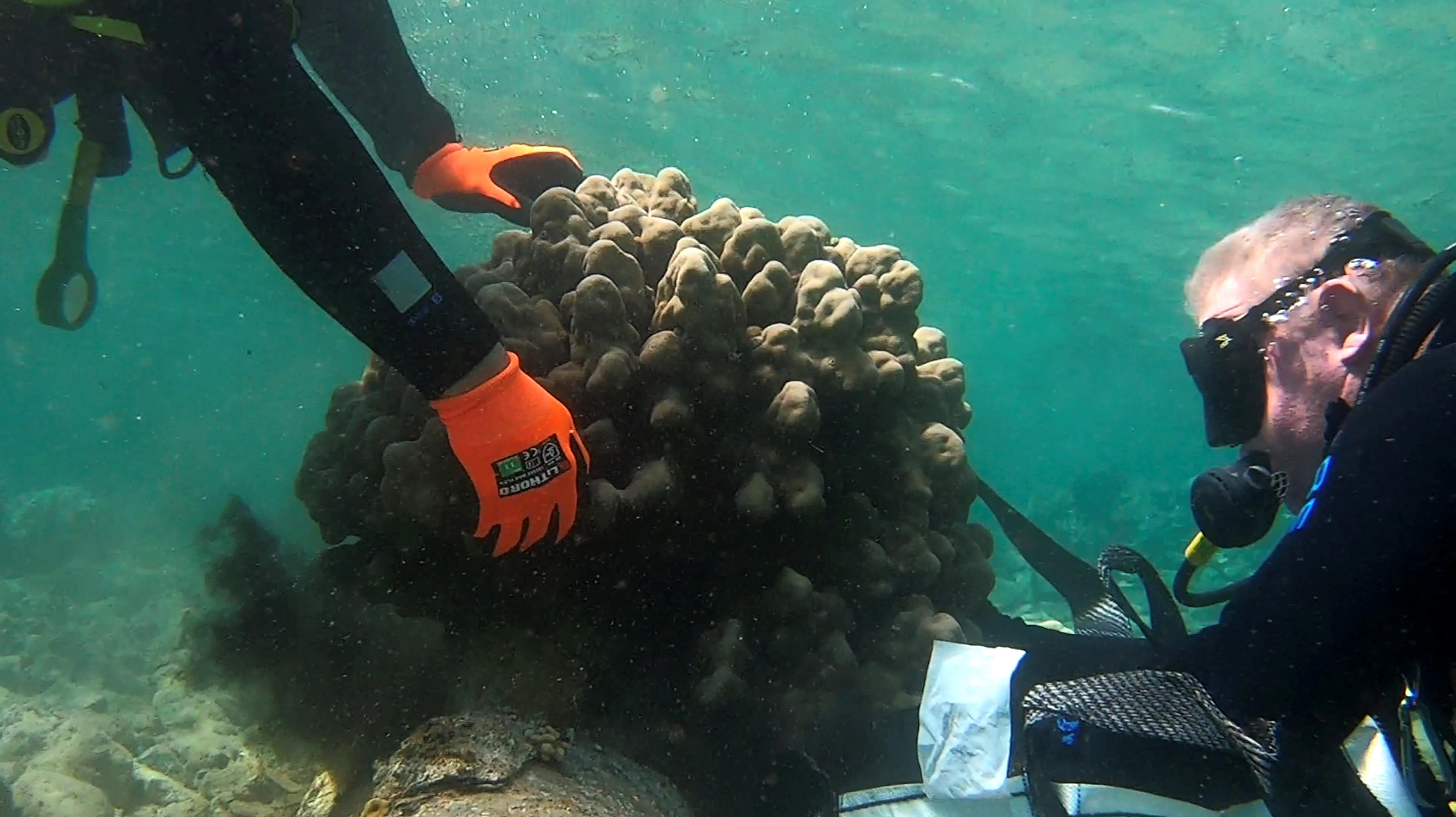 Scientists gently relocate the coral reef in Eilat