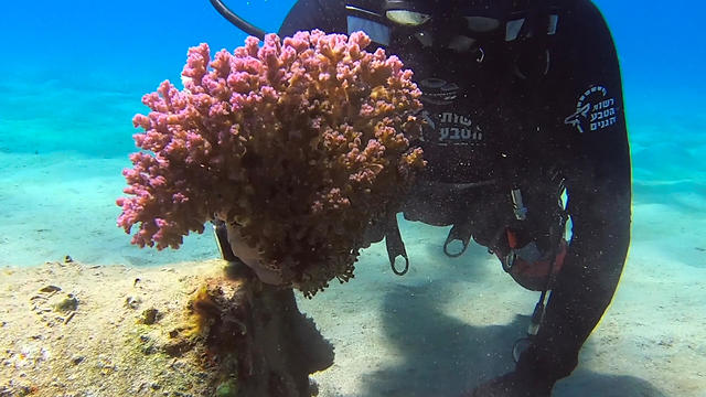 The unspoiled coral reef in Eilat