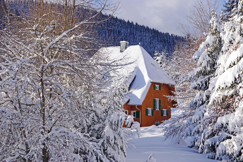 היער השחור בחורף. מביטים החוצה ורואים לבן מאופק לאופק  (צילום: צביקה בורג)