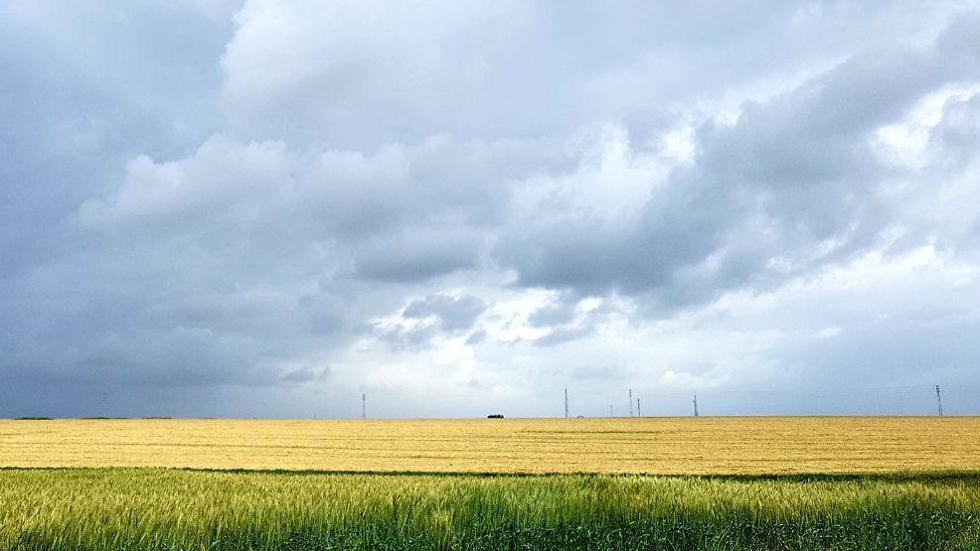 שדה במועצה אזורית אשכול (צילום: רועי עידן)