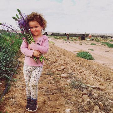 גידול פרחים בערבה