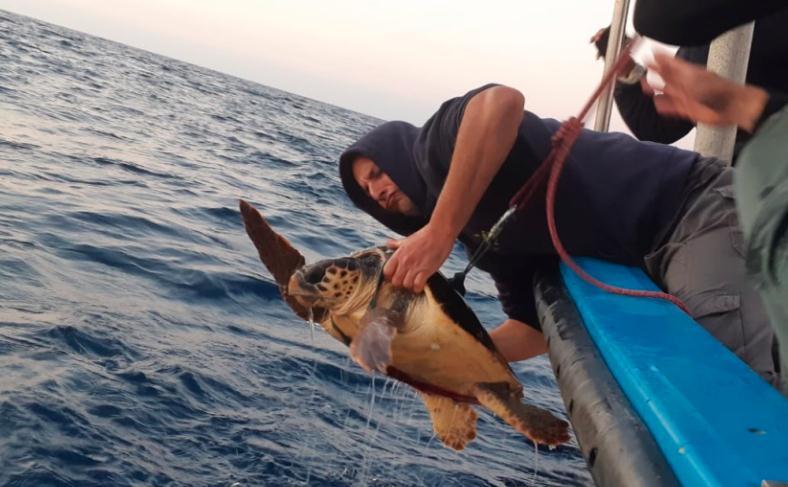 ניסוי המערכת בים עם הצבים (צילום: יניב לוי, רשות הטבע והגנים)