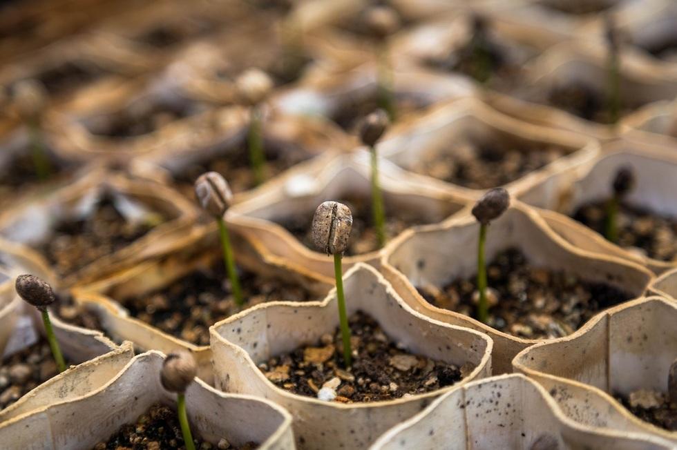 זרעים צומחים בגינה ()