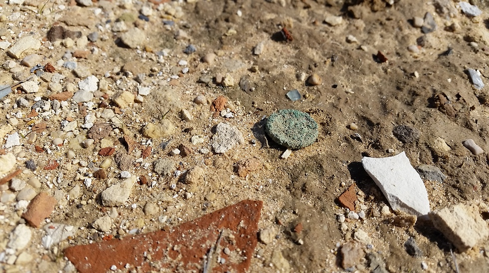 A surface in Elusa with ample finds scattered on it (Photo: Haifa University)