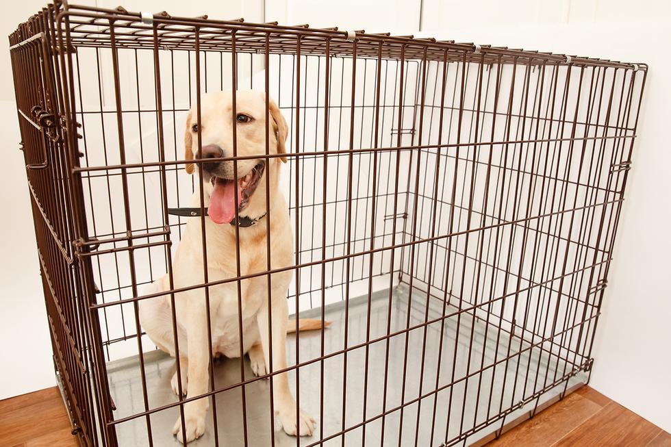 Клетка для собаки. Фото: shutterstock