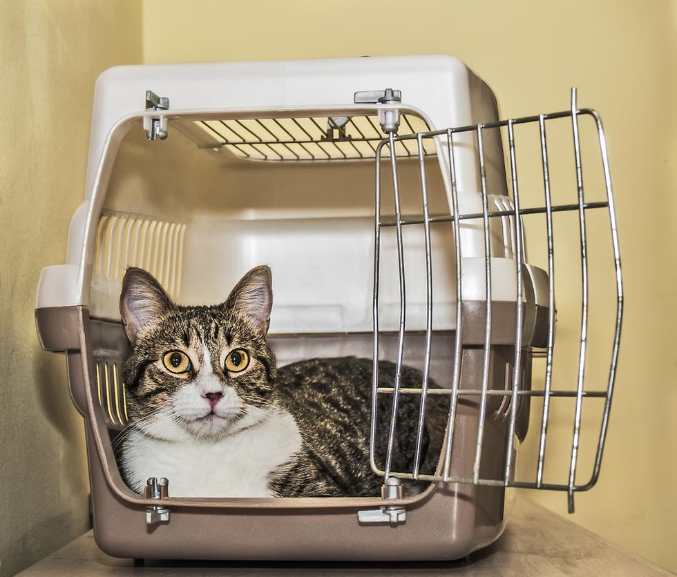 Клетка-переноска для кошек. Фото: shutterstock