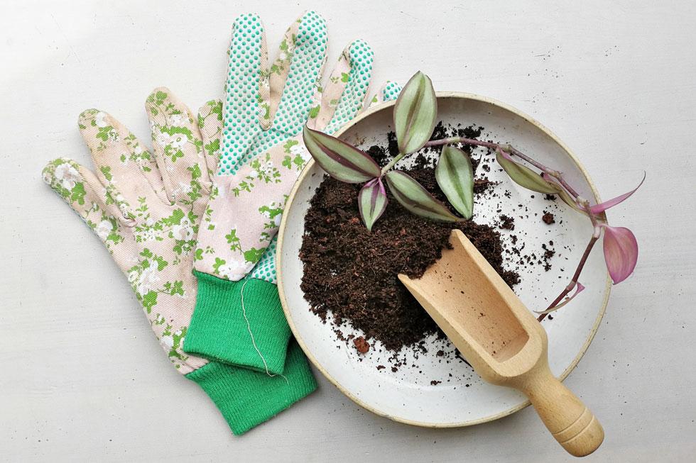 כפפות עבודה הן פריט חובה לגננים, במיוחד למטפחי ציפורניים (צילום: רינת טל )