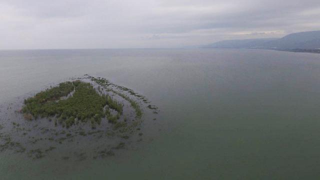 האי כנרת הולך ונעלם (צילום:  שי מזרחי, רשות הכינרת)