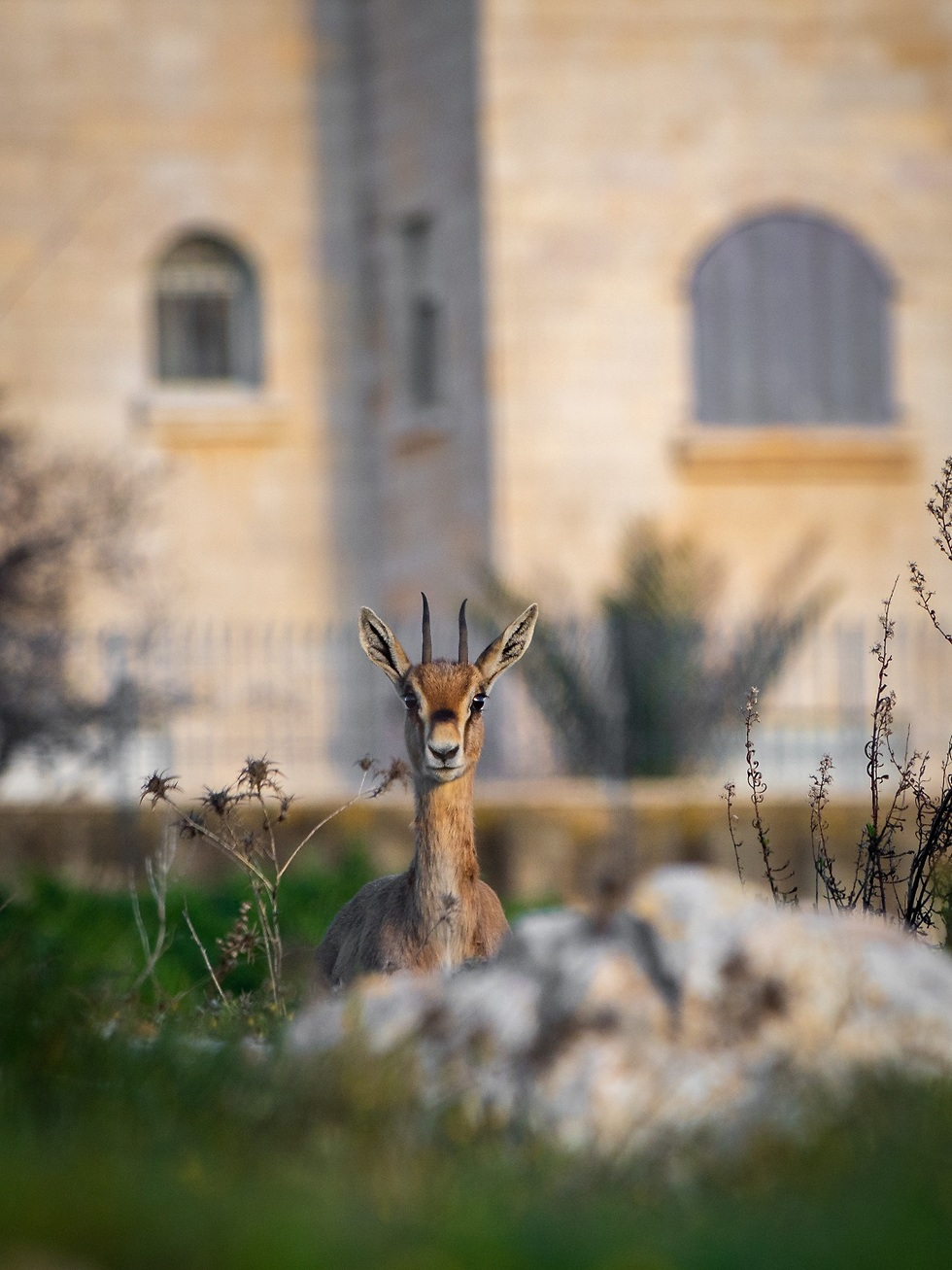 צביה ליד אחד הבתים (צילום: יעקב בן בונן)