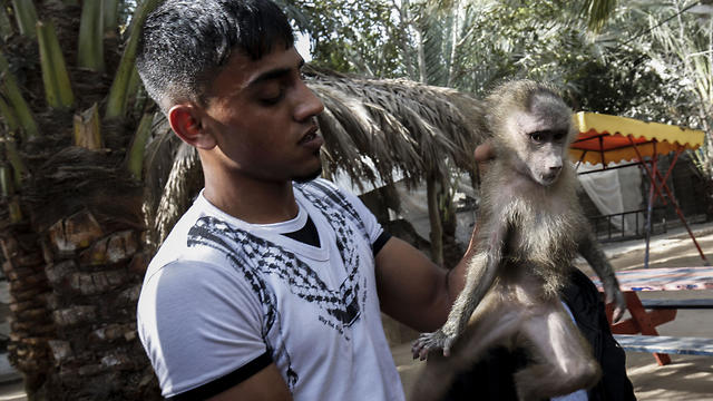A Palestinian worker carries a monkey at a zoo in Rafah in the southern Gaza Strip, during the evacu