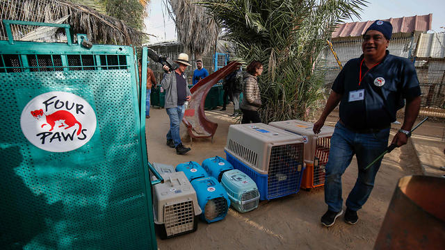 """Amir Khalil, a veterinarian with the international animal welfare charity """"Four Paws"""" walks in front of cages containing animals at a zoo in Rafah in the southern Gaza Strip, during the evacuation"""