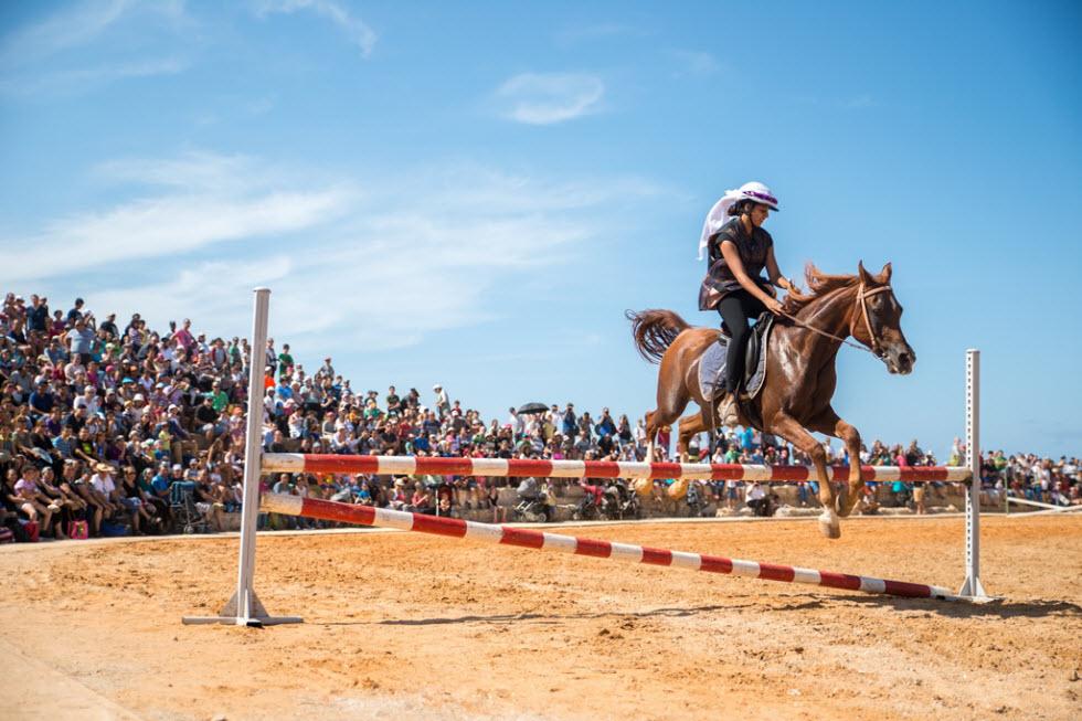 סוסים בהיפודרום (צילום: צופית דמרי)