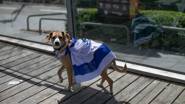 כלב (צילום: אוהד צויגנברג)
