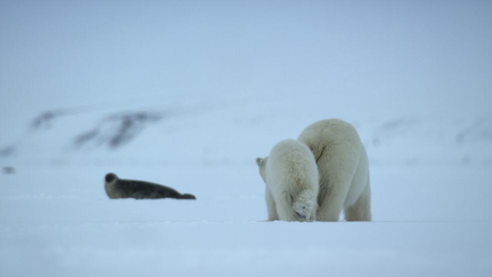 דובי קוטב (צילום: Jamie McPherson / Silverback /  Netflix)