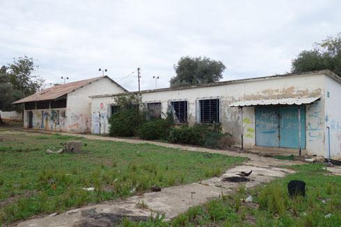 בית הספר ''מעלה הזיתים'' בפתח תקוה. אווירה קיבוצית (צילום: מיכאל יעקובסון)