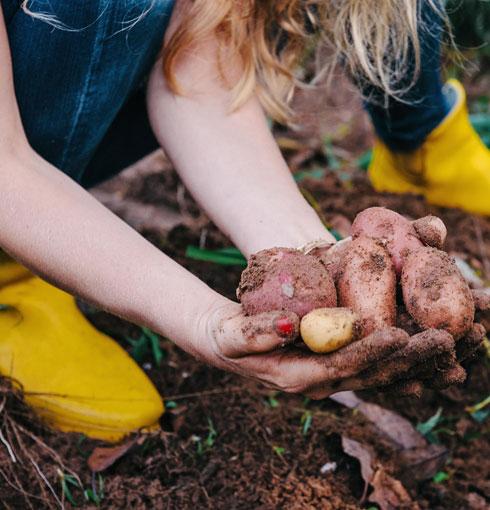 מגדלת תפוחי אדמה ומייצרת מפירות ההדר בגינה חומר ניקוי אורגני לבית (צילום: ליטל מרדכי)