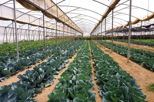חוות בין השיטין  (צילום: צביקה בורג)