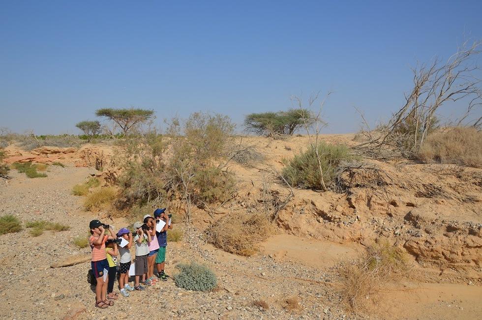 מחפשים זנבנים בשמורת נחל שיזף  (צילום: דורית אביהר)