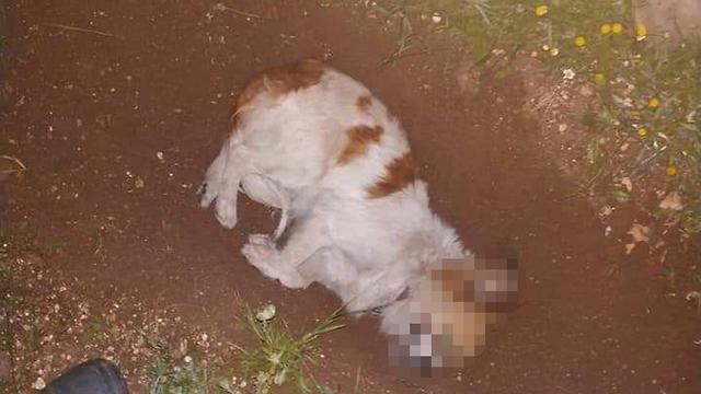 הרעלת חיות בכפר ג'וליס ()