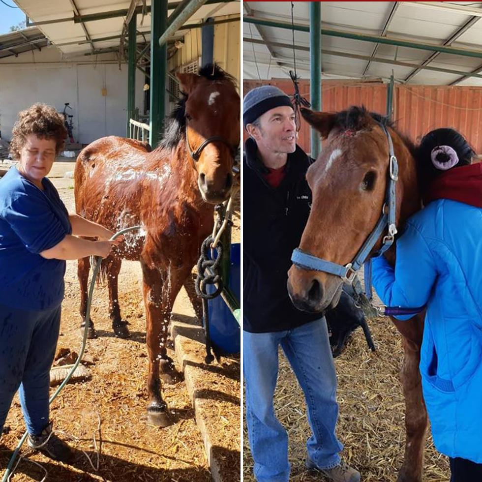 חברי העמותה לסוסים מיניאטוריים בישראל מטפלים בסוסיתא (צילום: רפי רוזילו)
