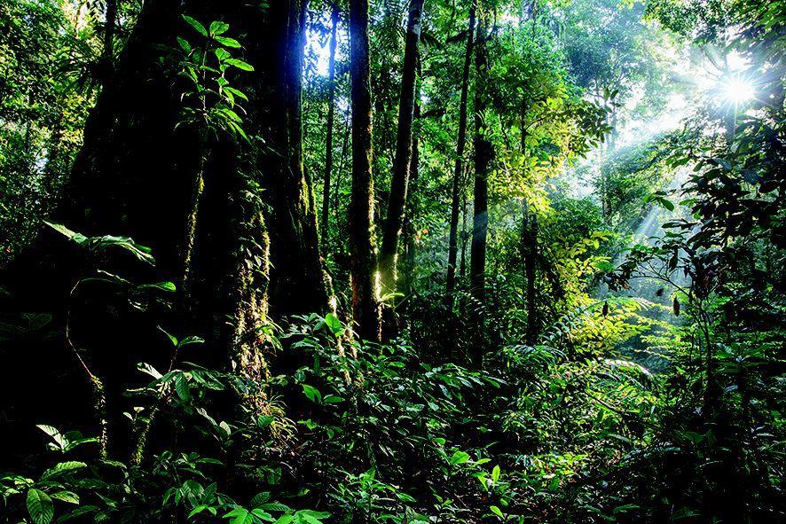 אורנג-אוטן (צילום: Huw Cordey   Netflix  Silverback)