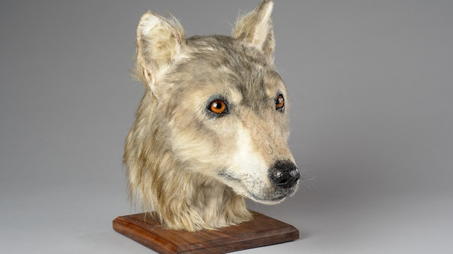 הפנים של הכלב ששוחזרו (צילום: HES, סקוטלנד)