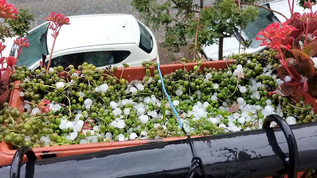Hail in Petach Tikva (Photo: Tzipi Lankin)