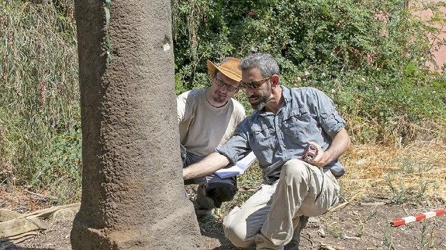 החוקרים בוחנים אחד משלושת עמודי המיל שפוענחו במושב רמות  (צילום: א' קובלבסקה. משלחת חפירות סוסיתא, אוניברסיטת חיפה)